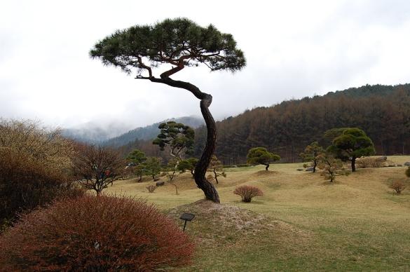 Morning Calm Garden, Gapyeong, Gyeonggi-do