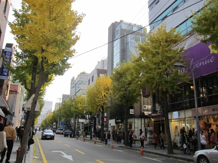 salah satu fashion street di Gangnam-gu yang dipenuhi jejeran pohon ginkgo di sisi kiri dan kanan jalan