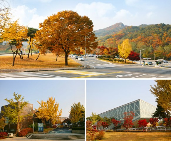 Nakseongdae's Garosu-gil Road (photo source credit to : KTO)