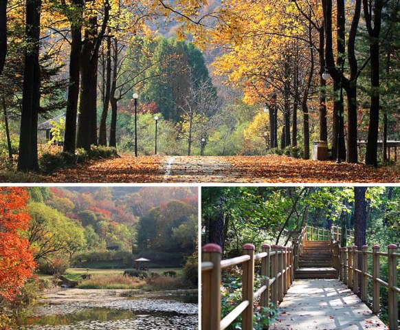 Seoul Grand Park Forest Park (photo source credit to : Seoul Grand Park / KTO)